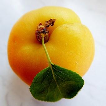 apricot-797428__340