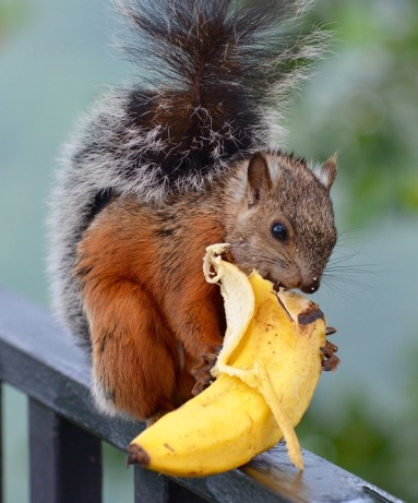 squirrel-1043536_960_720