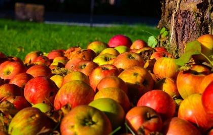 apple-1719620_960_720